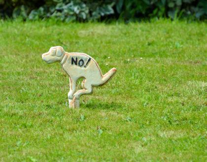 dog pooping lawn atlanta